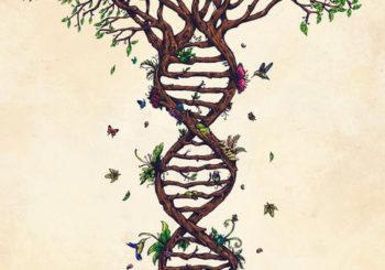 Metacostellazioni Familiari,  Metagenealogia e Tarologia,  Mindfulness Archetipica: Calendario degli Incontri Mensili