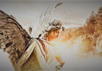 Angeli – Serata a offerta libera